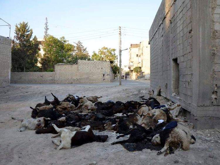 Dead animals are seen at the Zamalka area, where activists say chemical weapons were used by forces loyal to President Bashar Al-Assad in the eastern suburbs of Damascus