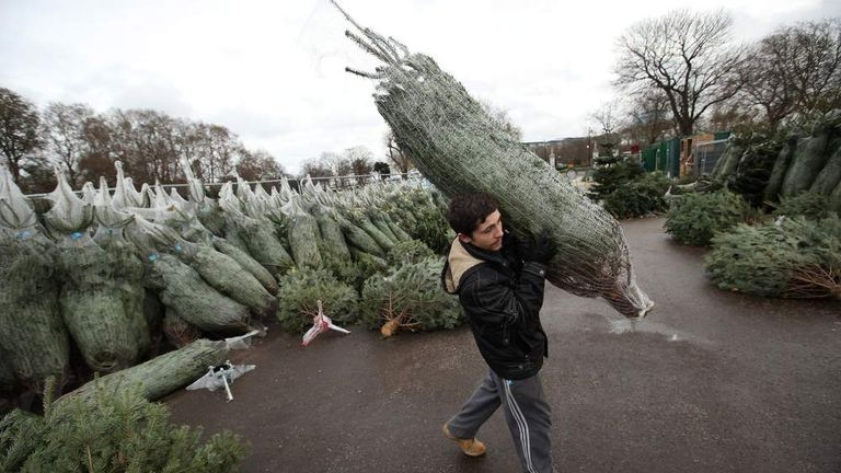 Christmas Tree Seller