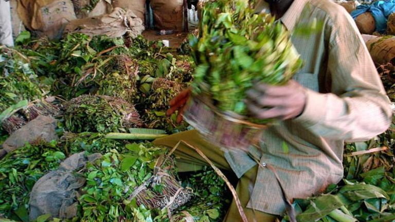 Khat Ban 'Could Aid Al Shabaab Recruiters' | UK News | Sky News