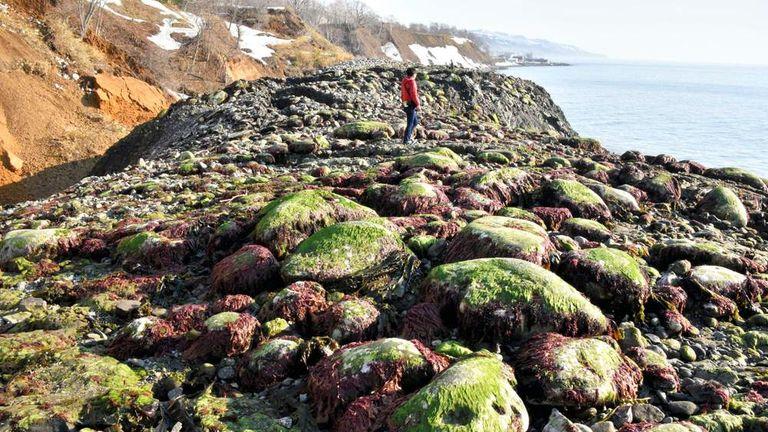 Unexplained Coastline Expansion in Eastern Hokkaido Baffle Locals
