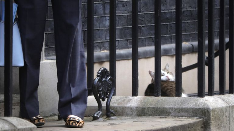 Larry, the Downing Street cat, looks up at Theresa May's shoes.