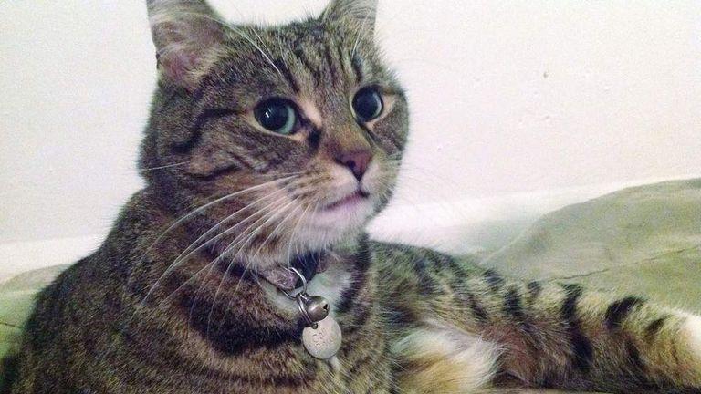 George Osborne's Cat Found Wandering Streets | Politics News