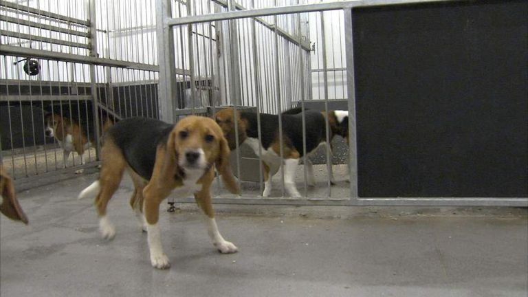 Controversial Puppy Breeding Farm Gets Go Ahead Uk News Sky News