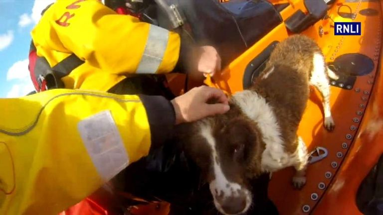 Dramatic Rescue Of Dog From Rocks
