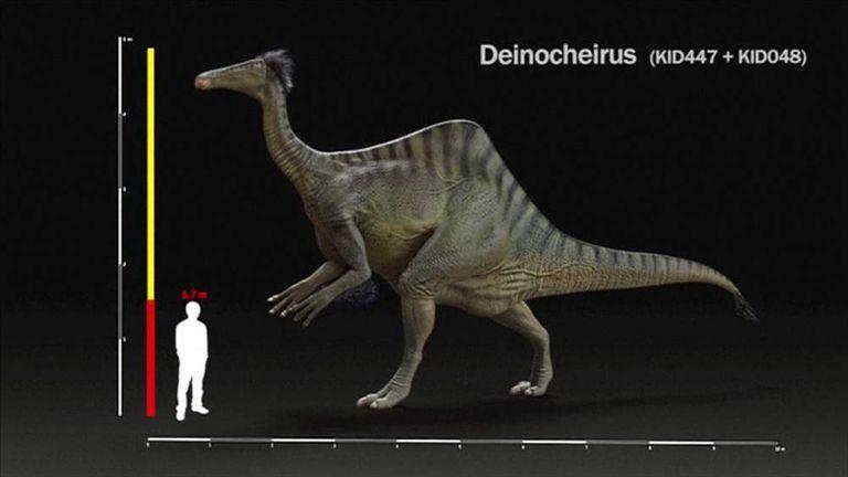 The Deinocheirus Mirificus Dinosaur