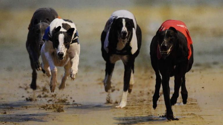 Rio Quattro Romps Home In Greyhound Derby Scoop News Sky