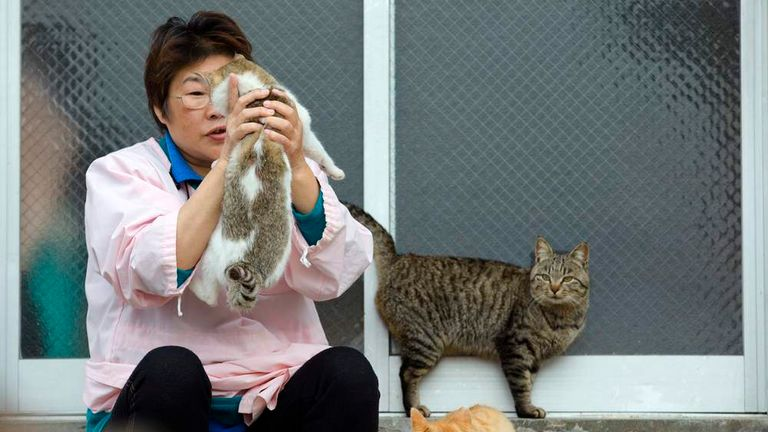 Village nurse and Ozu city official Atsuko Ogata holds a cat on Aoshima Island in Ehime prefecture in southern Japan
