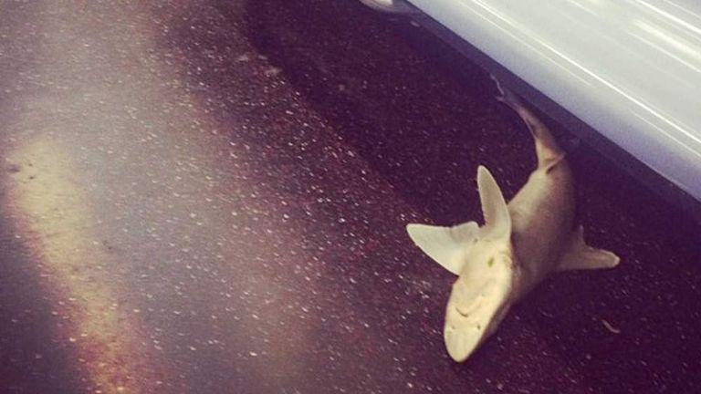 Shark Body Found On New York Subway By Isvett Verde