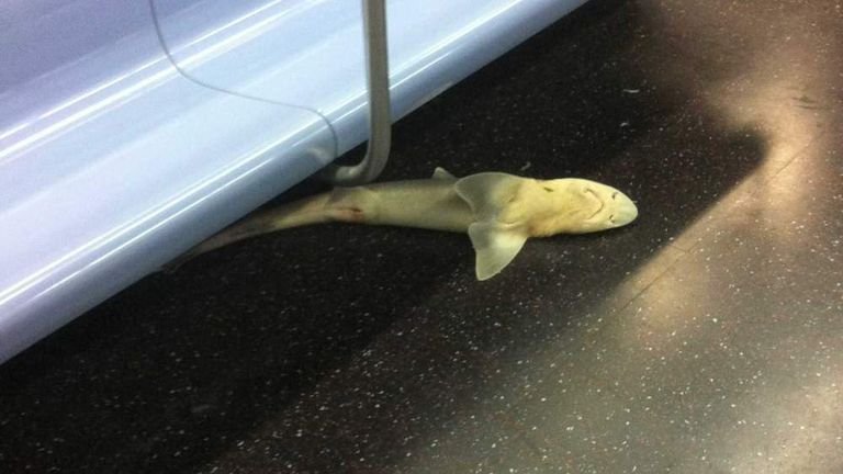 Shark Body Found On New York Subway By Brandon Sanchez