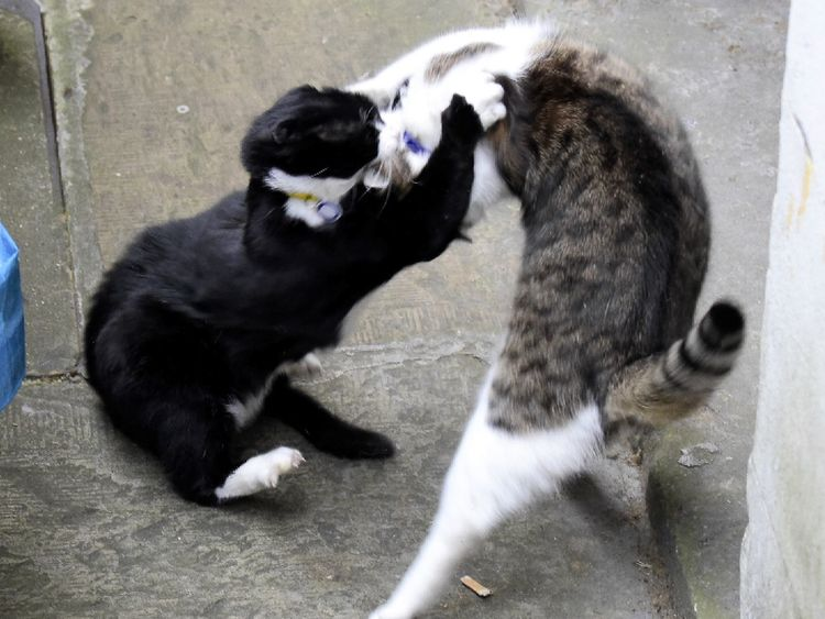 Larry and Palmerston do battle