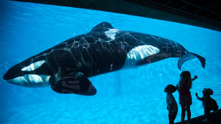 Children get a close-up view of a killer whale during a visit to SeaWorld in San Diego, California