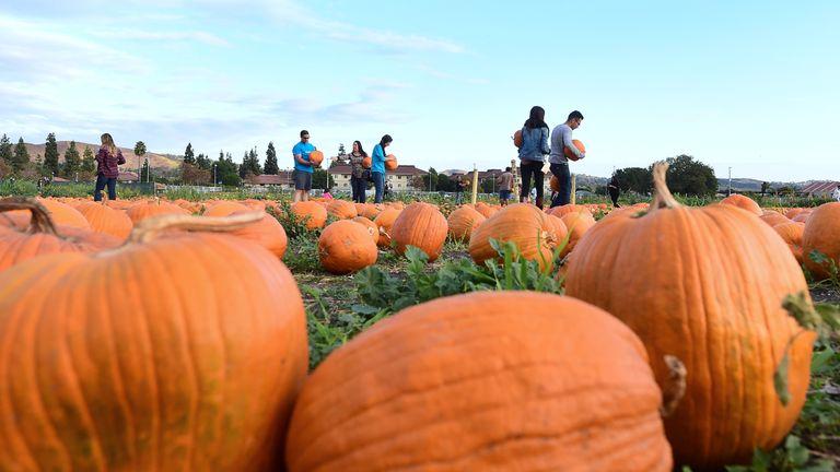 People shop for pumpkins ahead of Halloween in California