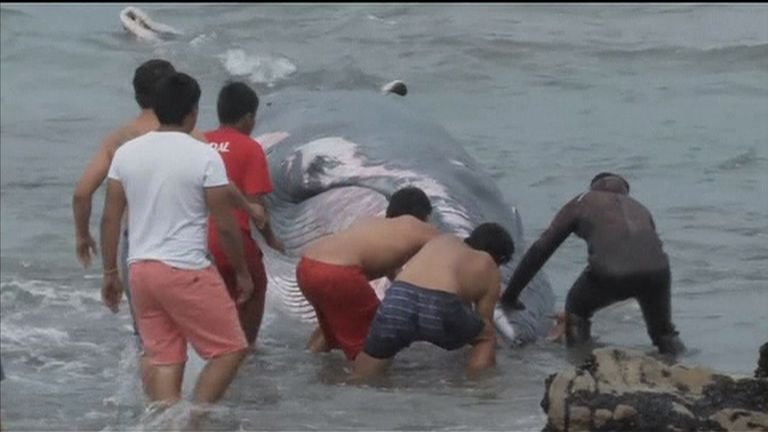 Rescuers quickly went to help the eight tonne whale