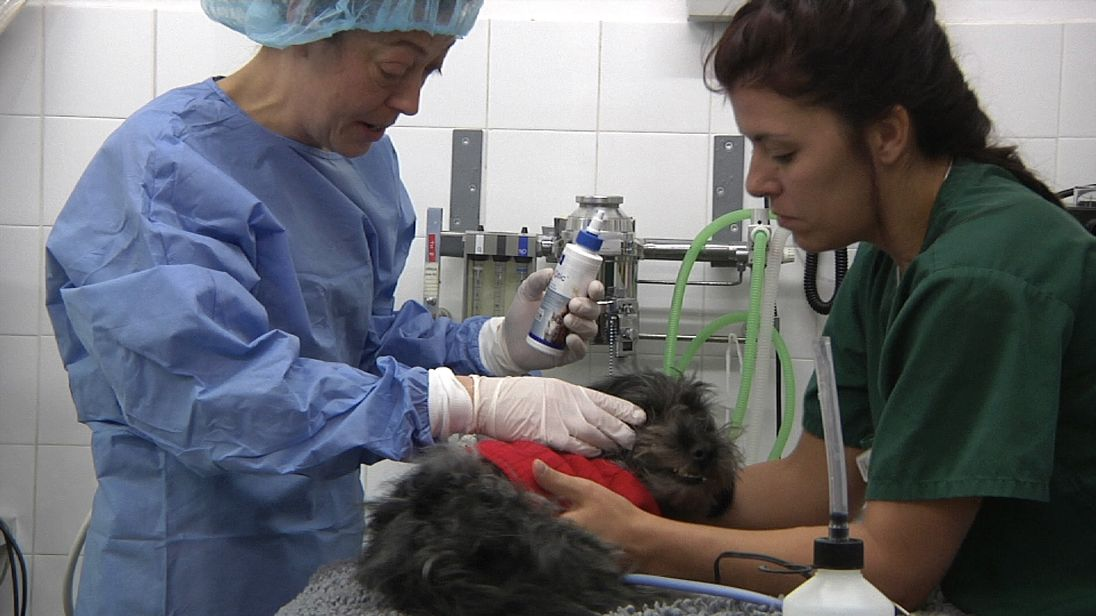 A dog is treated by a vet