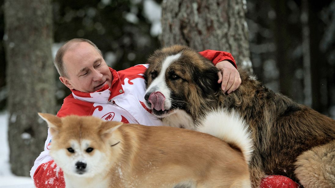 Russin President Vladimir Putin as he plays with his dogs 'Buffy' (up) and 'Yume' at his residence Novo-Ogariovo, outside Moscow