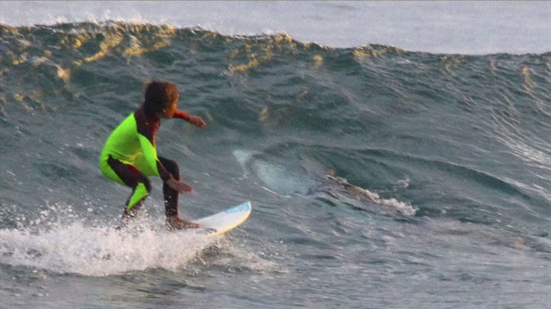 Something sinister downunder: Ten year old Eden Hasson, snapped sharing a wave with what experts say is a small Great White shark.     Pic: Chris Hasson via AP