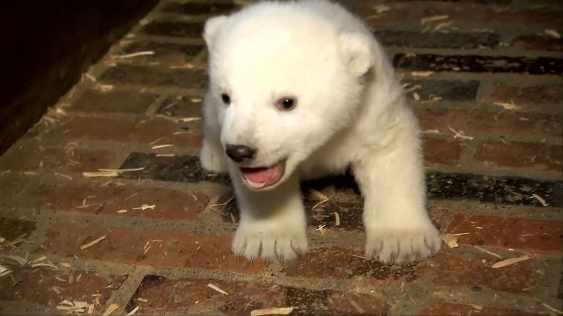 Polar bear in Berlin zoo needs a name