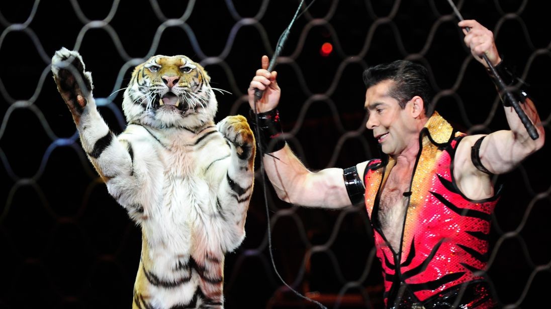 Tigers are still being used at the circus