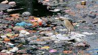A bird balances on a piece of floating plastic.