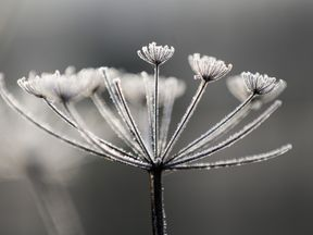 Overnight frost clings at Neumann's Flashes nature reserve in Northwich, England.