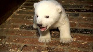 Polar bear in Berlin zoo needs a name