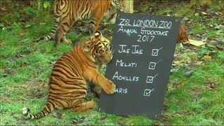 London Zoo stocktake 2017