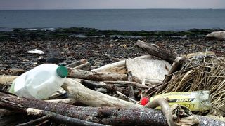 There has been a 43% increase in the number of plastic bottles washing up on UK beaches.