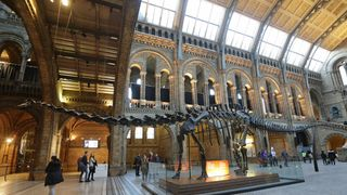 The replica model of Dippy the Diplodocus on display in Hintze Hall at the Natural History Museum, as visitors have just hours left to enjoy the exhibit before work to dismantle it begins