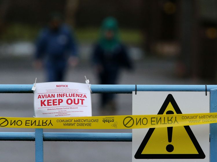 Bird flu prevention zone declared across whole of England