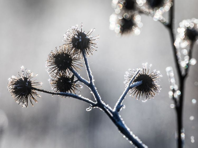 Frost clings to plants after plunging overnight temperatures in England.
