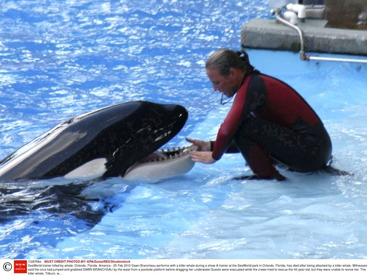 blackfish orca tilikum that killed seaworld orlando