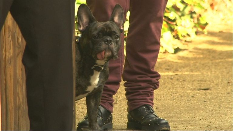 Gary, Carrie Fisher's dog at a private memorial at the former residence of actress Carrie Fisher January 5, 2017 in Beverly Hills, California. Fisher, 60, died December 27, 2016 after suffering a medical emergency onboard a flight from London to Los Angeles December 23. Debbie Reynolds, Fisher's mother, died December 28, 2016 of an apparent stroke