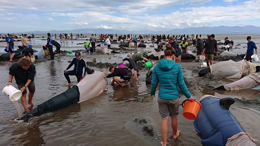 The whales were discovered in Golden Bay, to the north of New Zealand's South Island