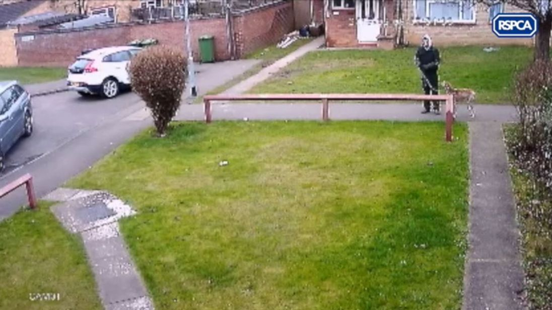 A man is seen on CCTV abandoning a lurcher
