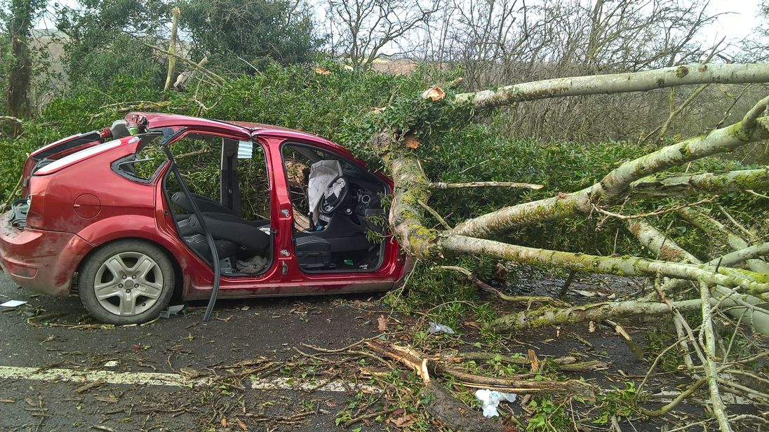 Two men were injured after a tree fell onto a car in Church Stretton, Shropshire