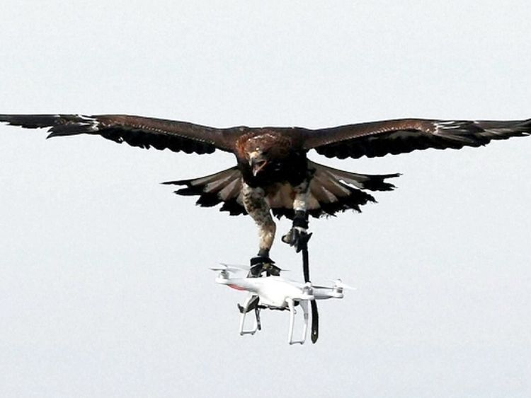 The French Air Force is training eagles to take out drones in mid-flight