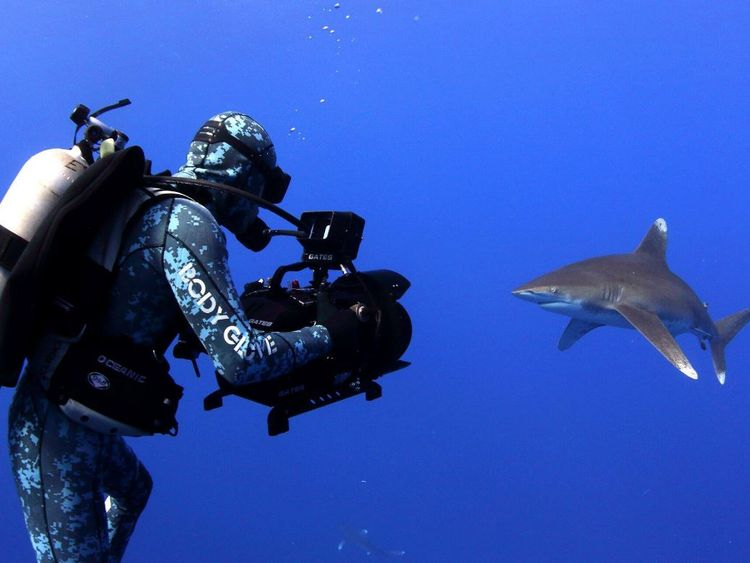 A shark being filmed in close proximity. Pic: Facebook/Sharkwater