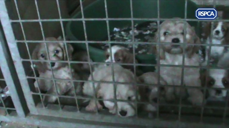 New dog breeding rules to crack down on 'backstreet breeders