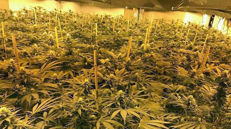 The 'enormous' cannabis farm found in an underground Wiltshire bunker
