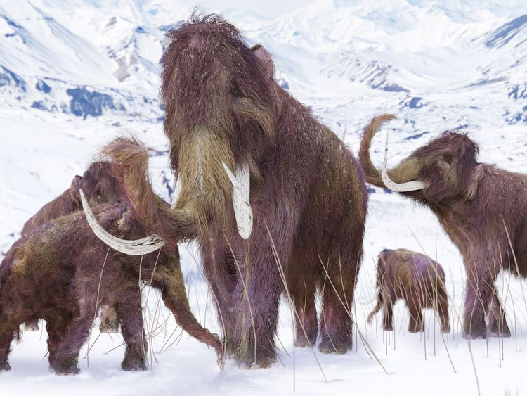 The majority of mammoth's died out 10,000 years ago (file image)