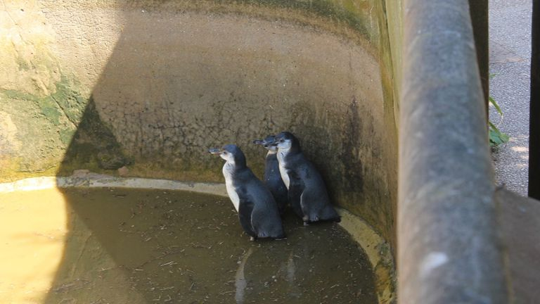 Penguins at South Lakes Zoo, Cumbria