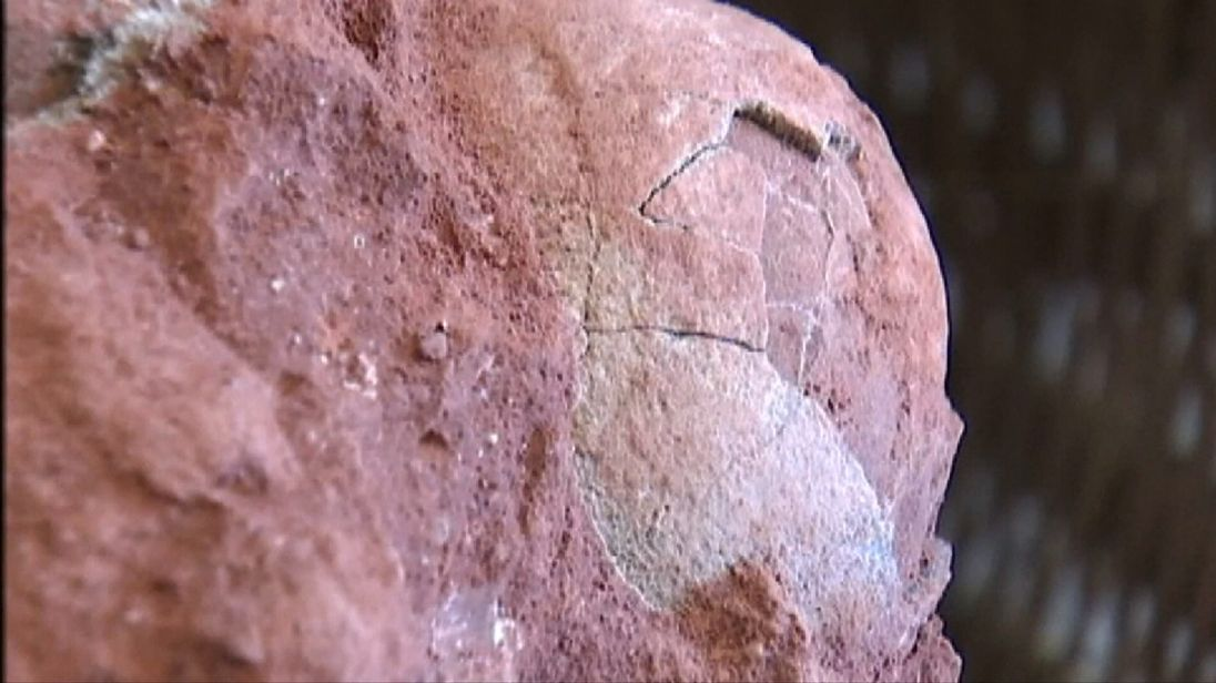 Five dinosaur eggs from the late Cretaceous Period are discovered in China