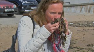 Seaweed - pungent