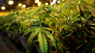 Campaigners say a digital-only marketplace should be created for cannabis