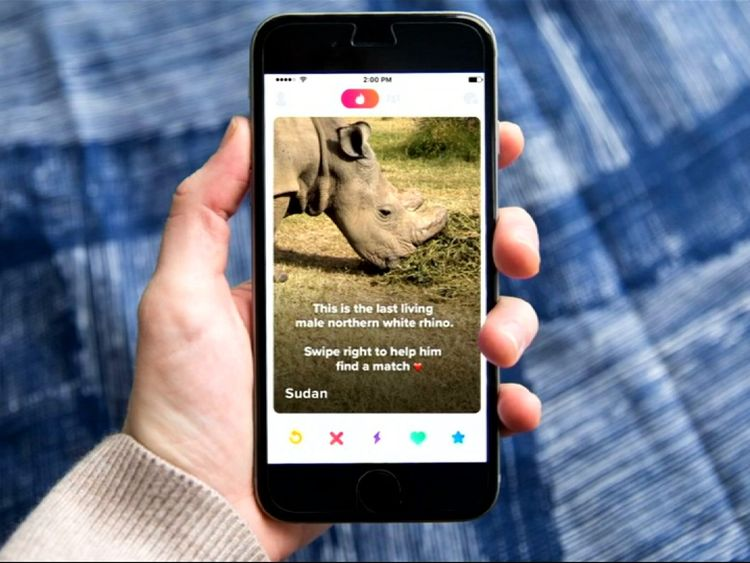 Sudan the rhino on his Tinder page which conservationists hope will raise funds to help him mate
