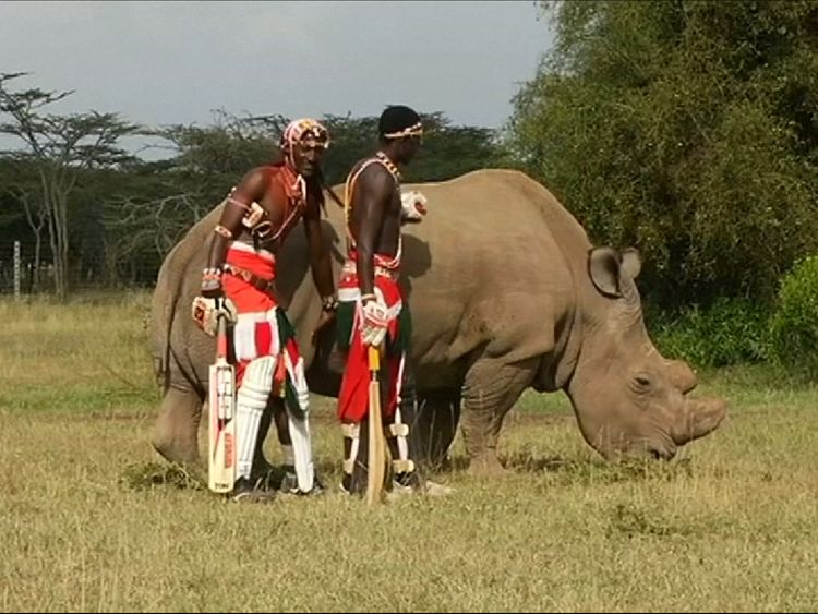 A northern white rhino called Sudan