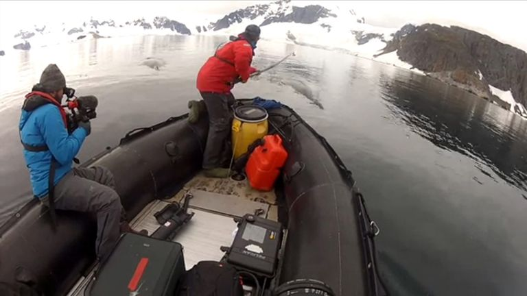 A scientist attaches one of the cameras to a humpback whale from a boat