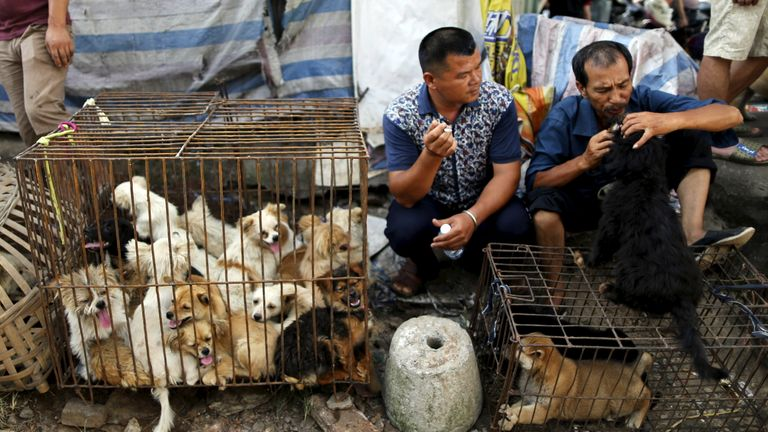 Dogs are sold in markets for the Yulin dog meat festival in June