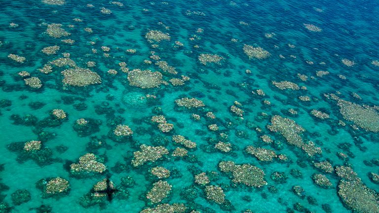 It is the fourth outbreak of mass bleaching in the Great Barrier Reef. Pic: Ed Roberts