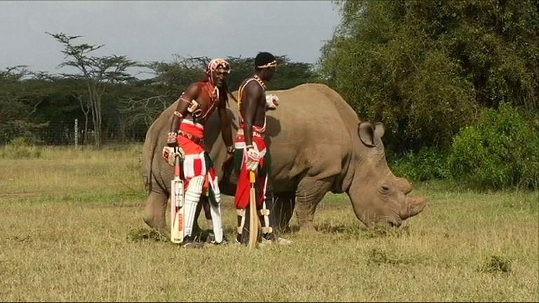 A northern white rhino called Sudan
